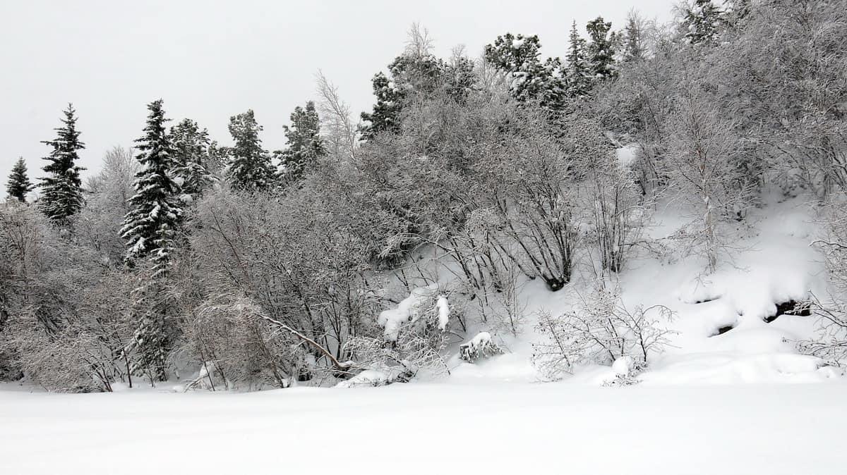 пейзажи на зимнике Лабытнанги - Мужи - Азовы - Теги - Приобъе