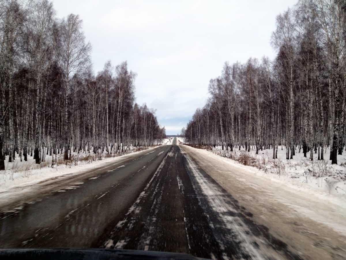 типичный зауральский лес, трасса Курган - Исетское