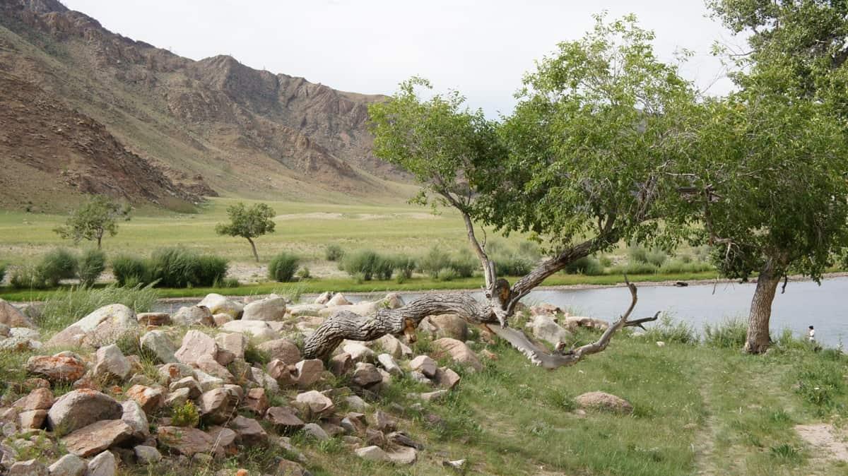стоянка на берегу Дэлгэр Мурэн в Монголии