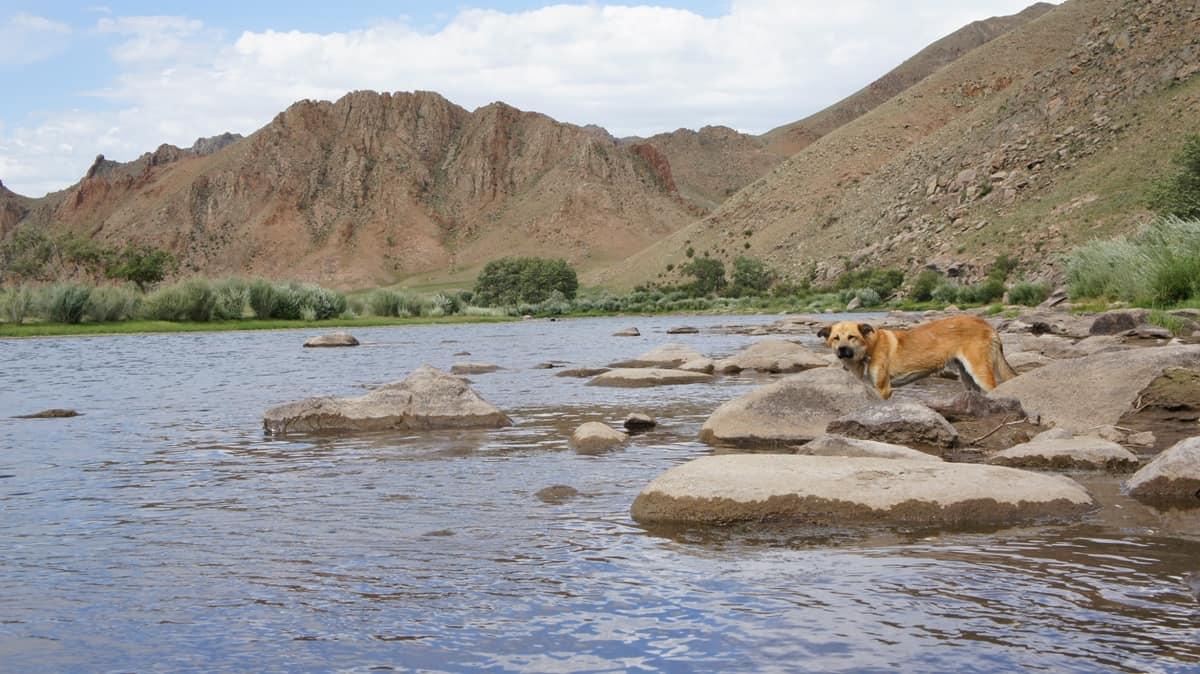 река, горы и собака