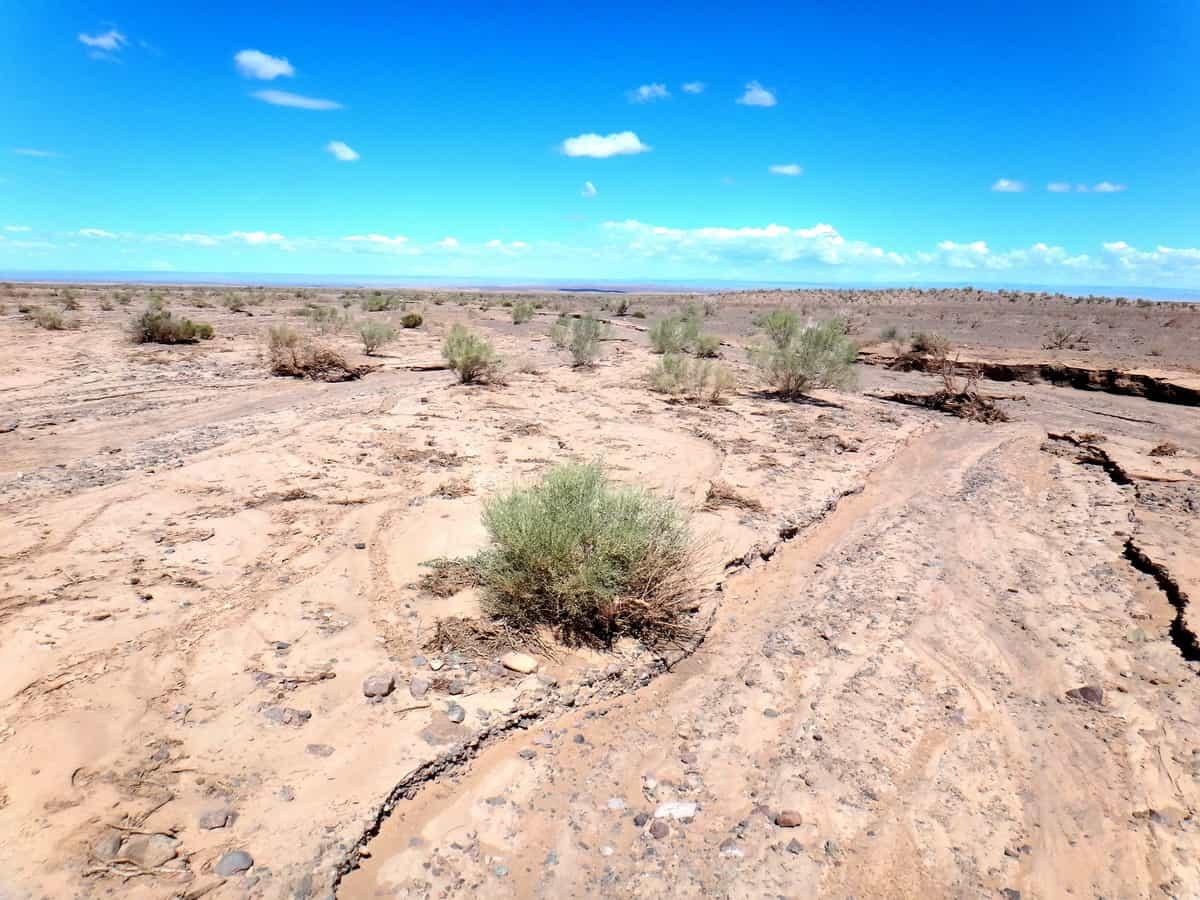 растительность пустыни Гоби