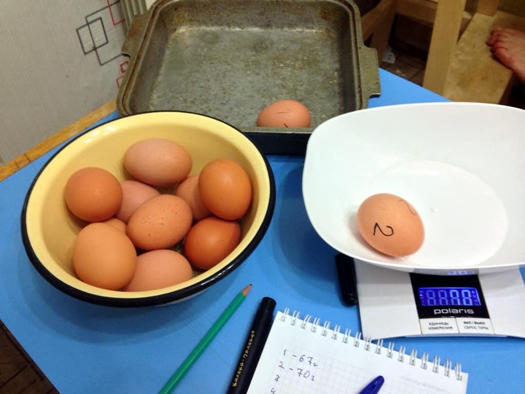сколько весит яйцо, просто любопытно