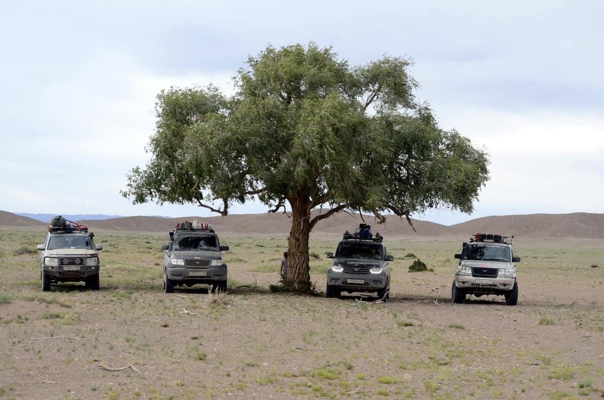 одинокое дерево в пустыне Гоби