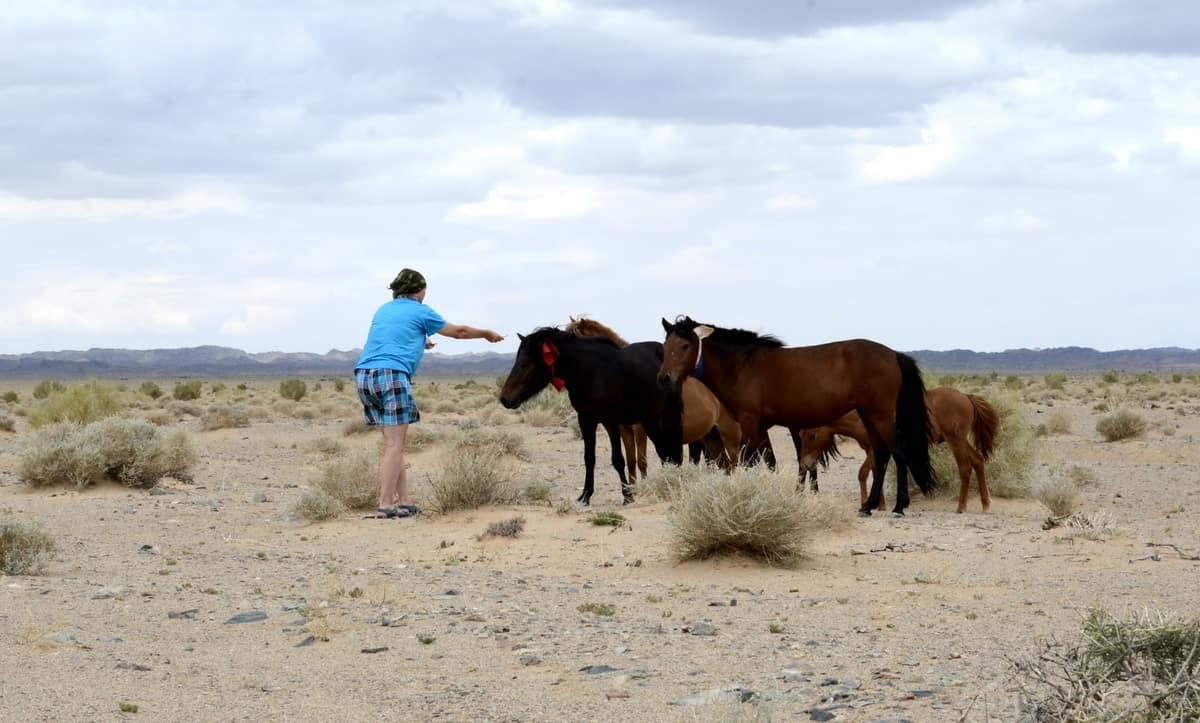 кормление лошадей с рук
