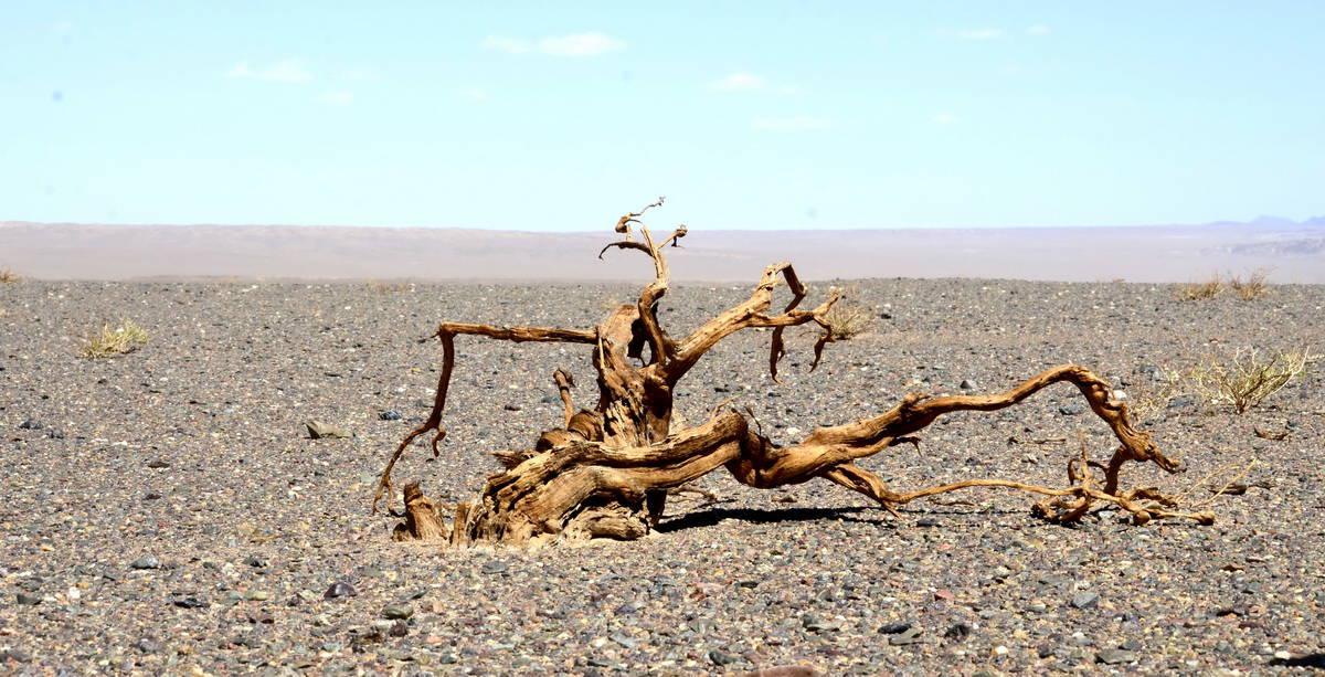 растительность в южной пустыне Гоби