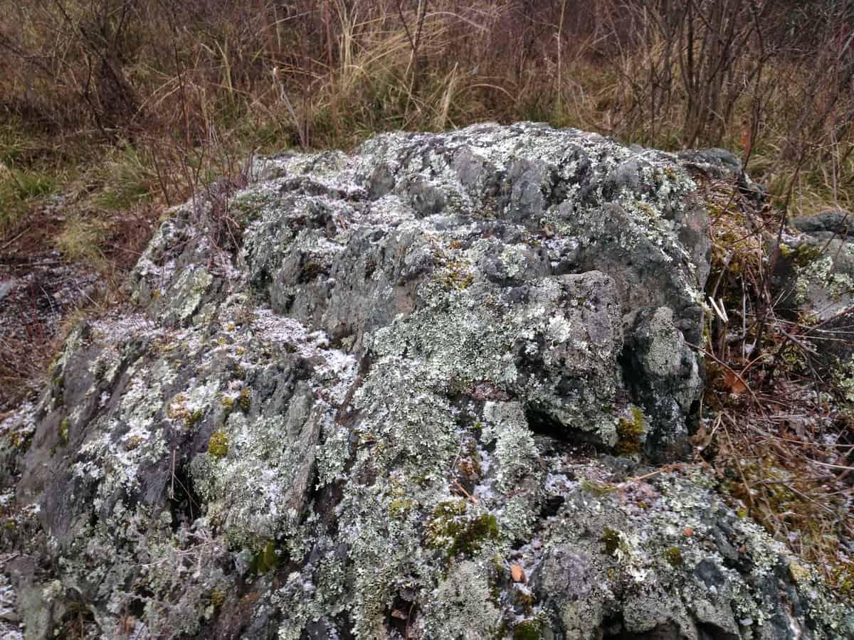 мох на камнях