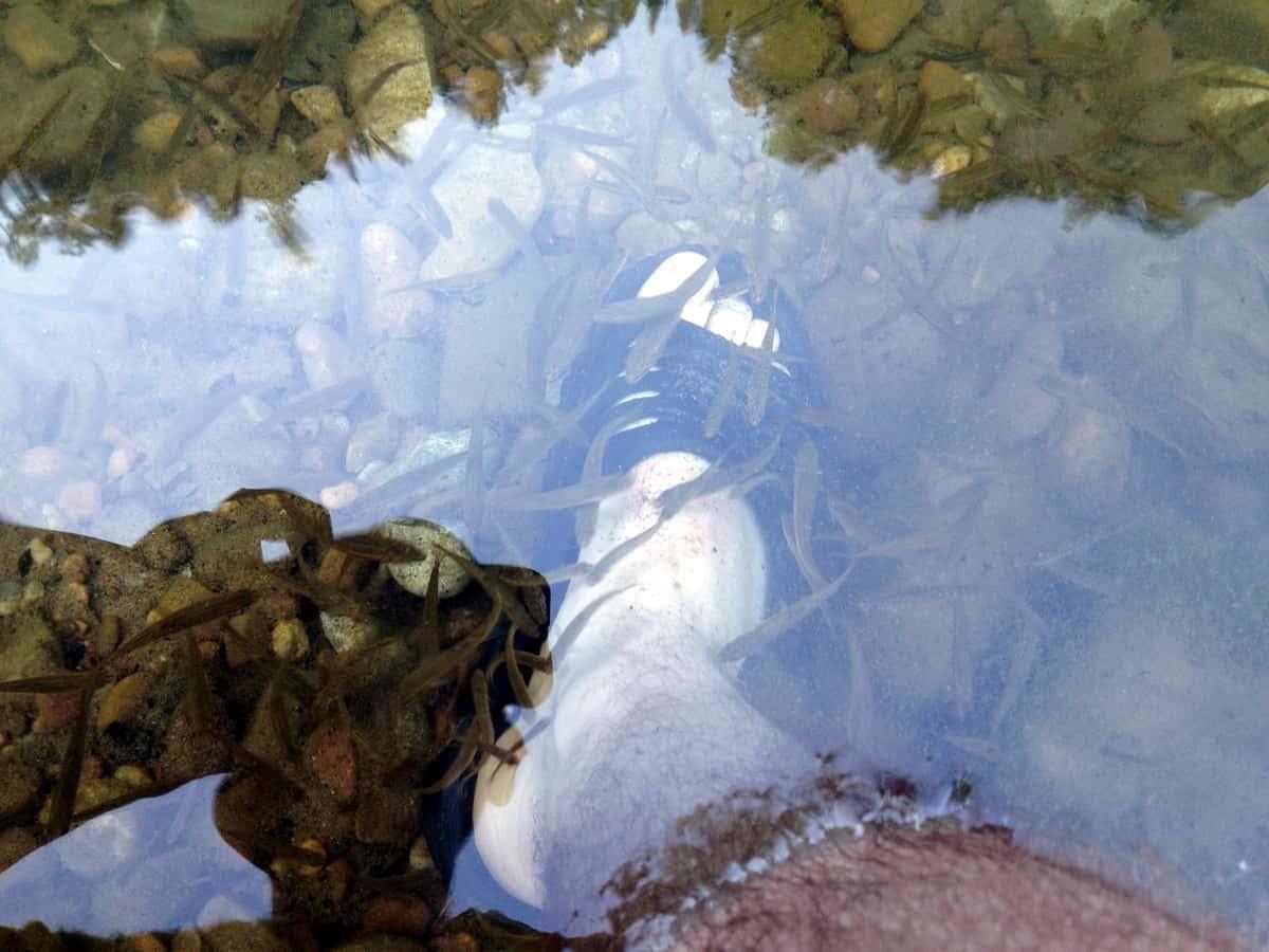 рыба в реке Зилим