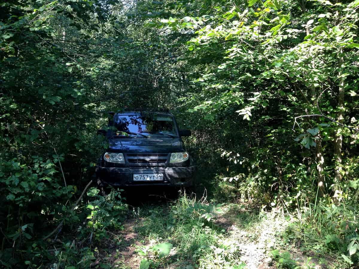 УАЗ патриот в лесных зарослях
