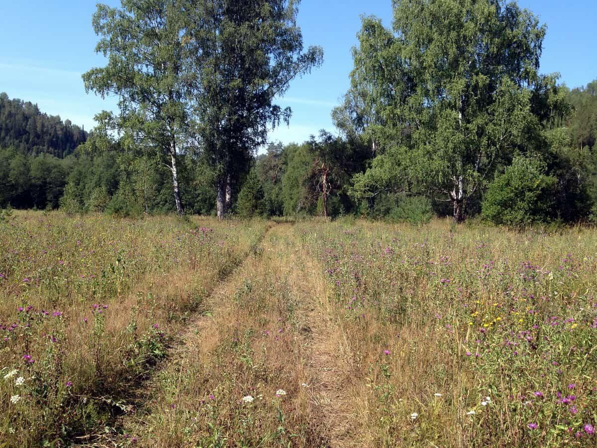 красивая поляна в лесу