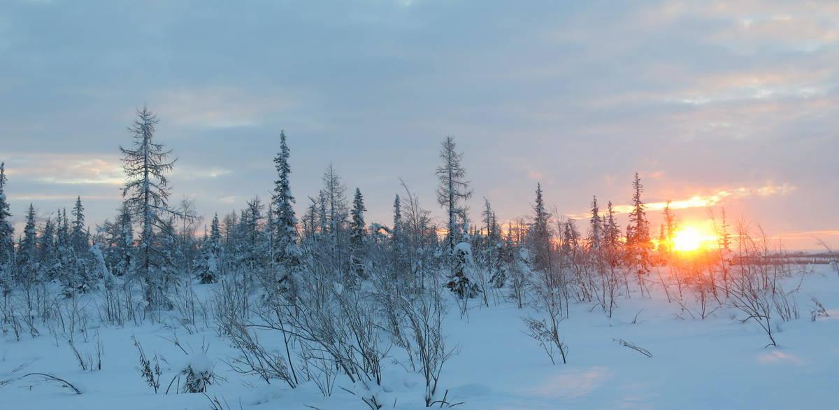 красивый рассвет в зимней тундре