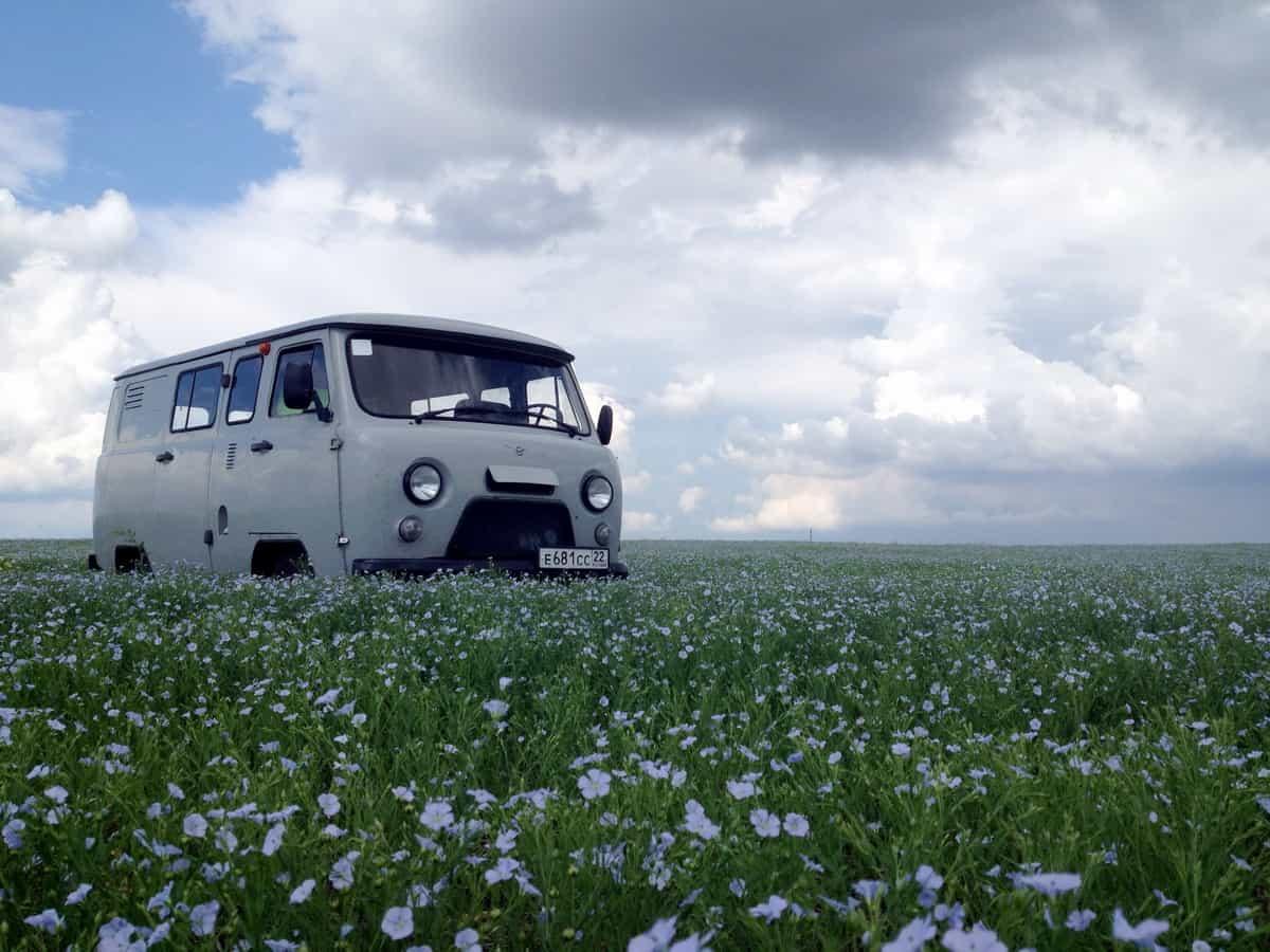 поле с льном, цветение