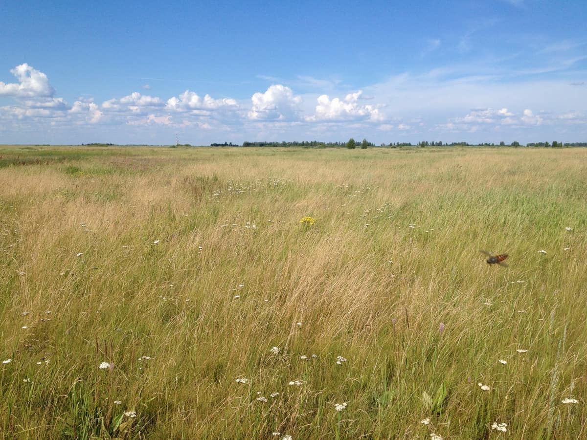 Зауральская степь в курганской области