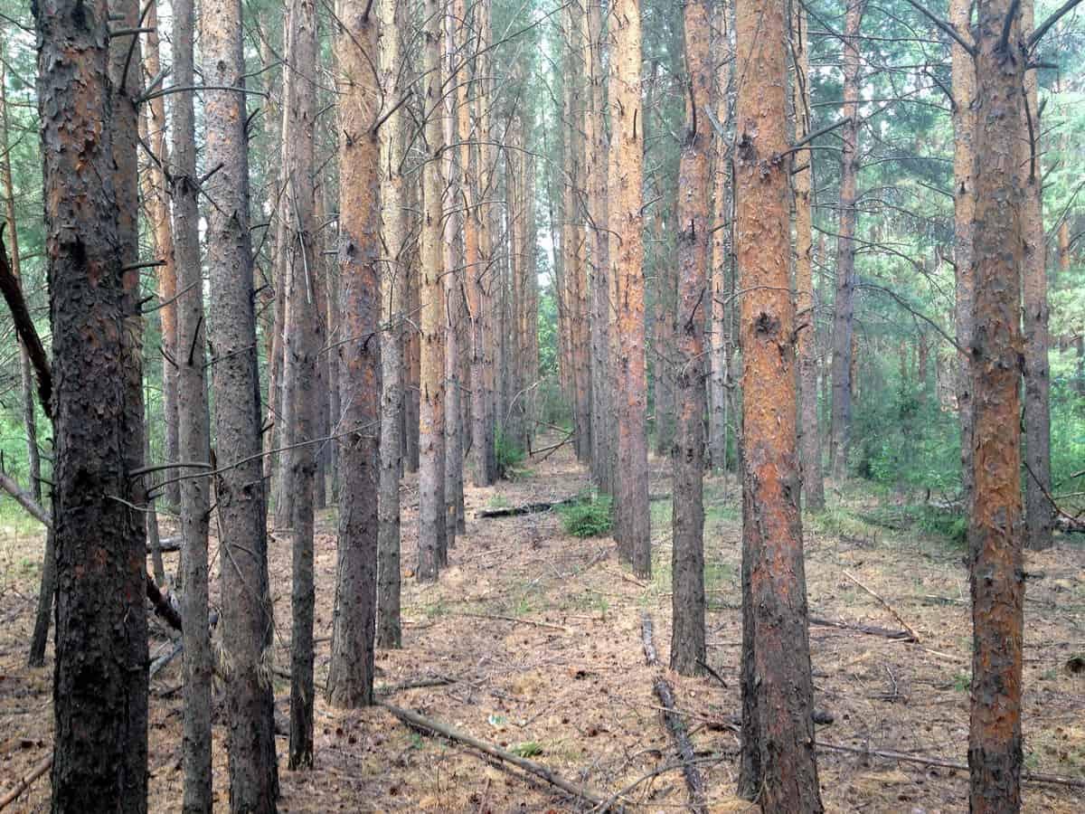 геоглиф - недпись из деревьев