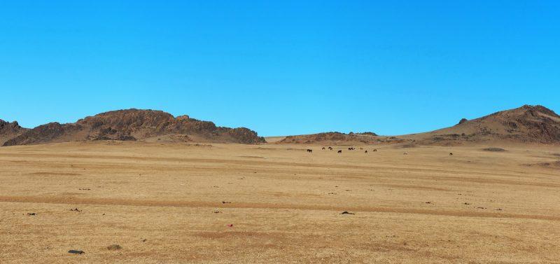 Монголия, пейзаж, степь и горы