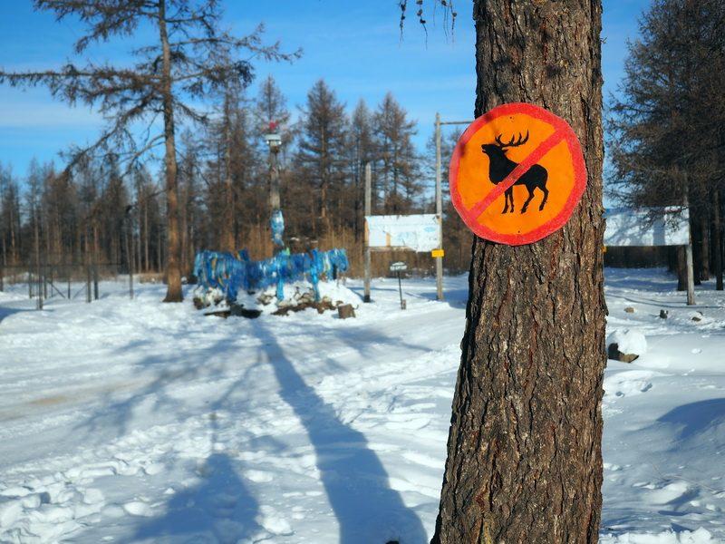 дорожный знако олень