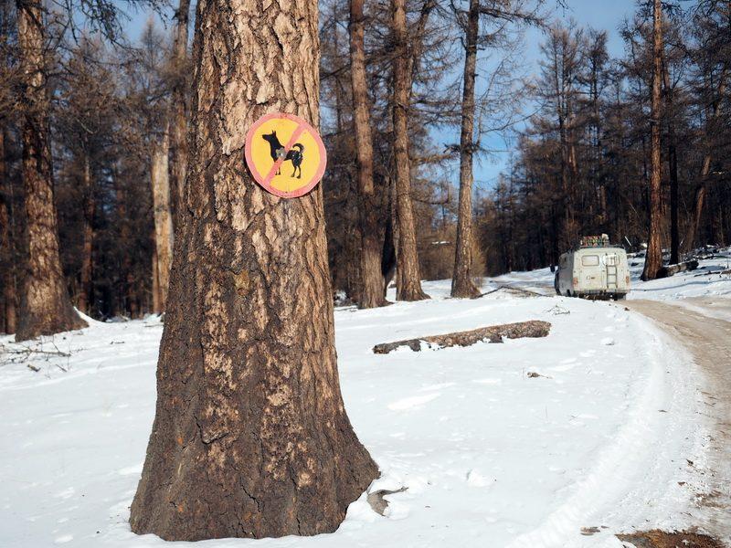 дорожный знак собака, road sign dog