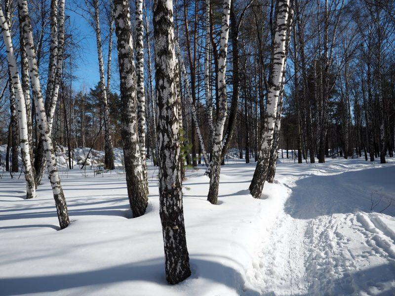 зимний пейзаж, деревья