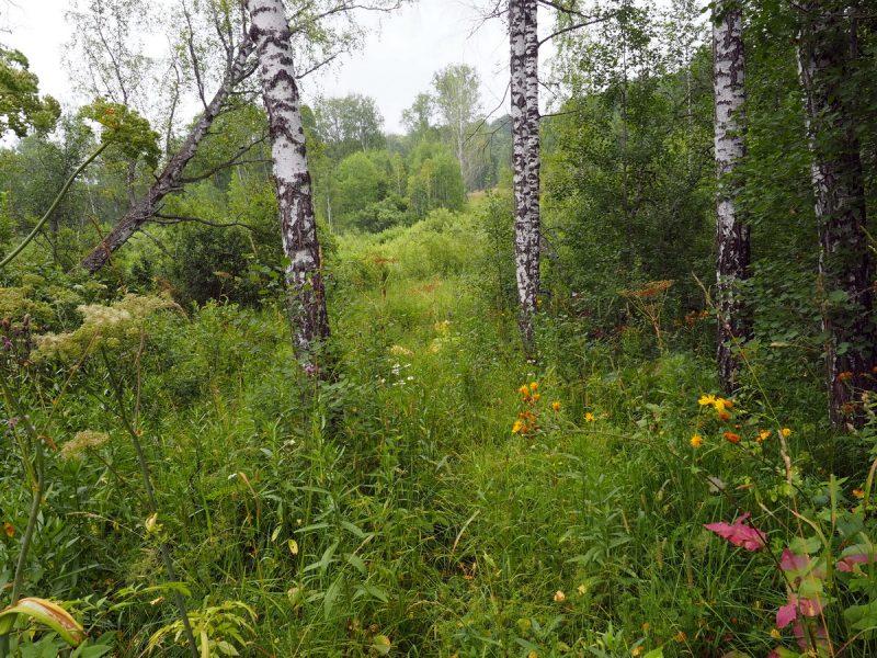 на буханке по лесу