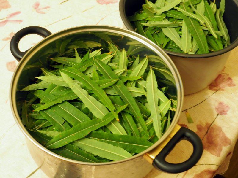 листья кипрея для копорского чая