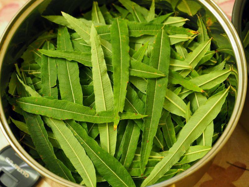 готовим копорский чай
