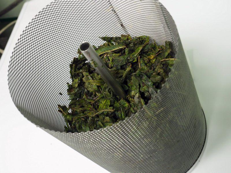 иван-чай перед лиофильной сушкой