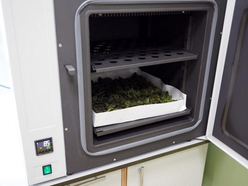сушка копорского чая в сушильном шкафу SNOL