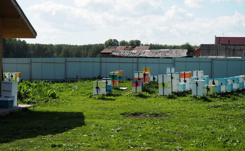 домашняя пасека, home apiary