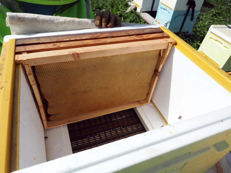 пустые соты, empty honeycombs
