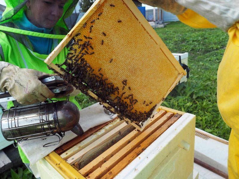 рамка с медом, frame with honey