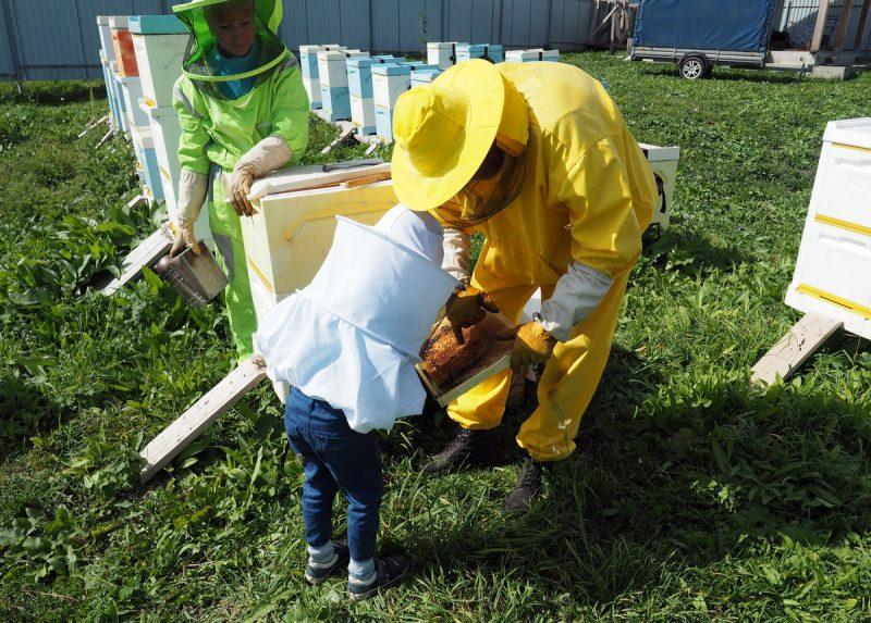 экскурсия по пасеке для детей, apiary tour for children