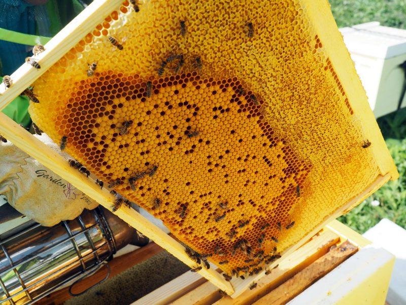 рамка с медом и пыльцой, frame with pollen and honey
