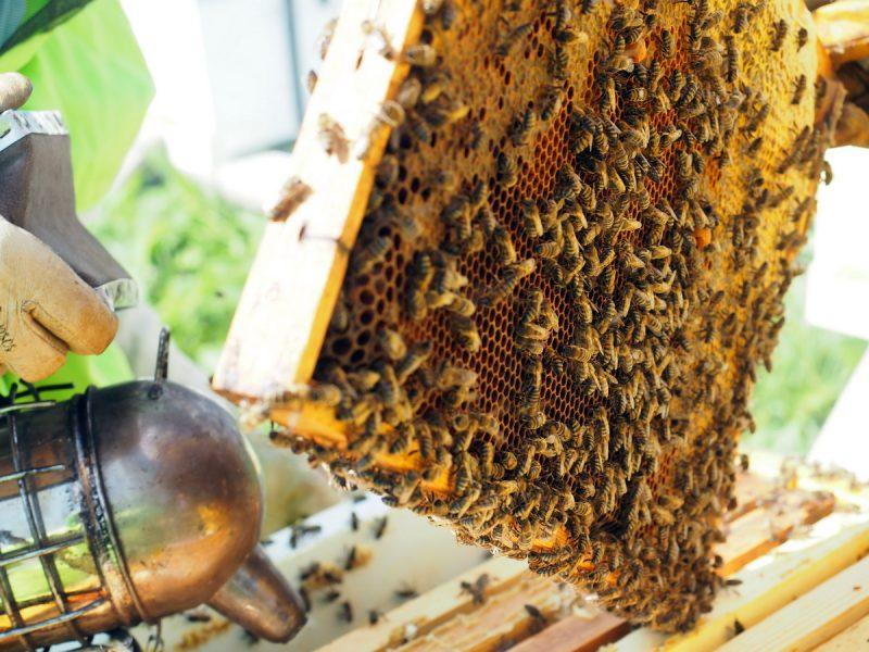 самый лучший мёд