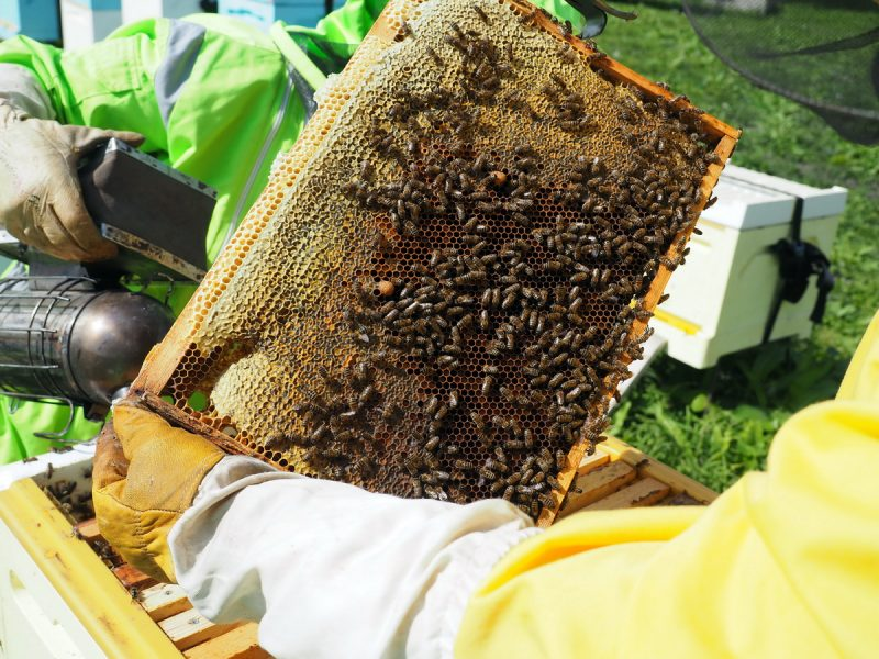 рамка с мёдом, frame with honey