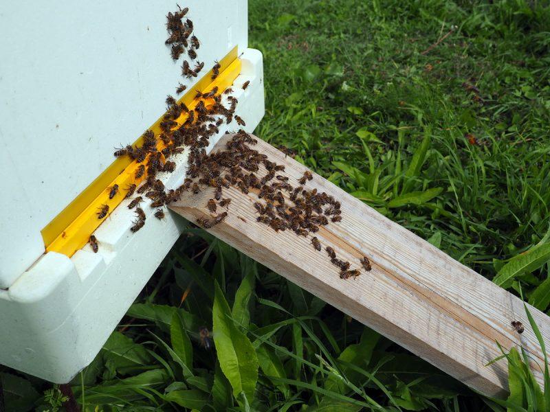 улей BeeBox, BeeBox hive