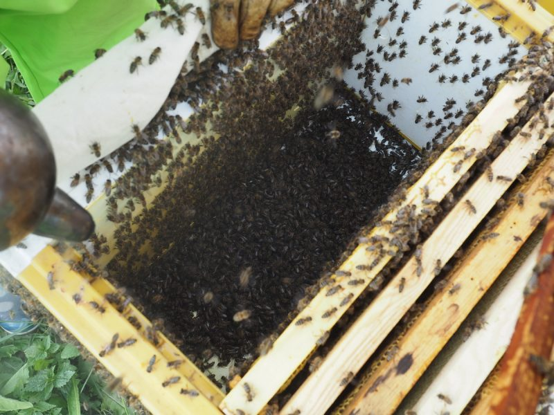 пчелиная семья, bee family