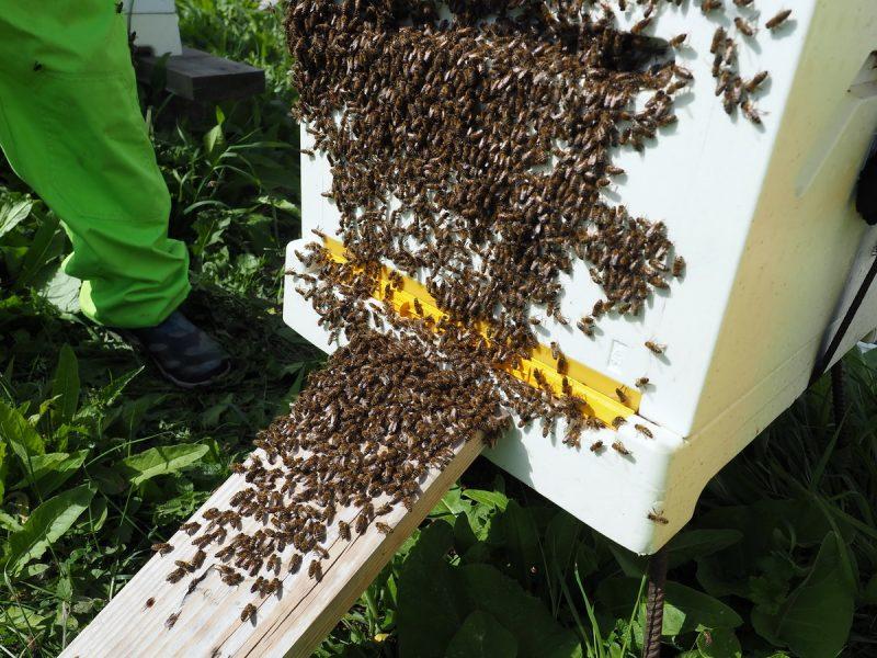 улей, hive beebox