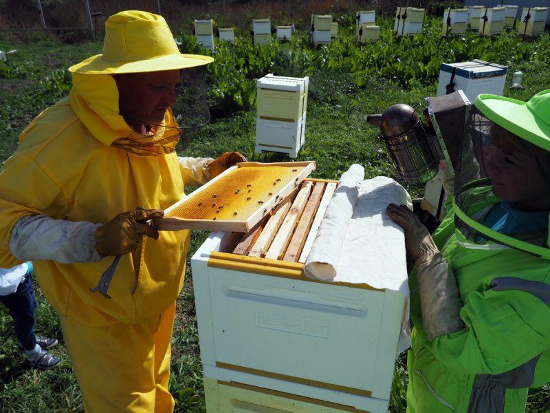 пчеловоды в сибири, beekeepers in siberia