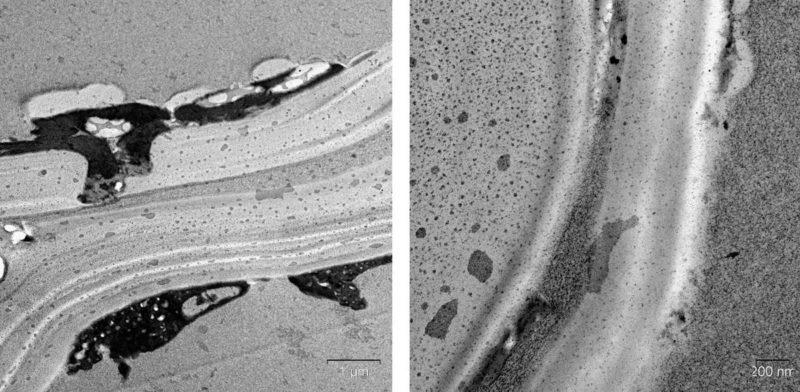 клеточная стенка растения