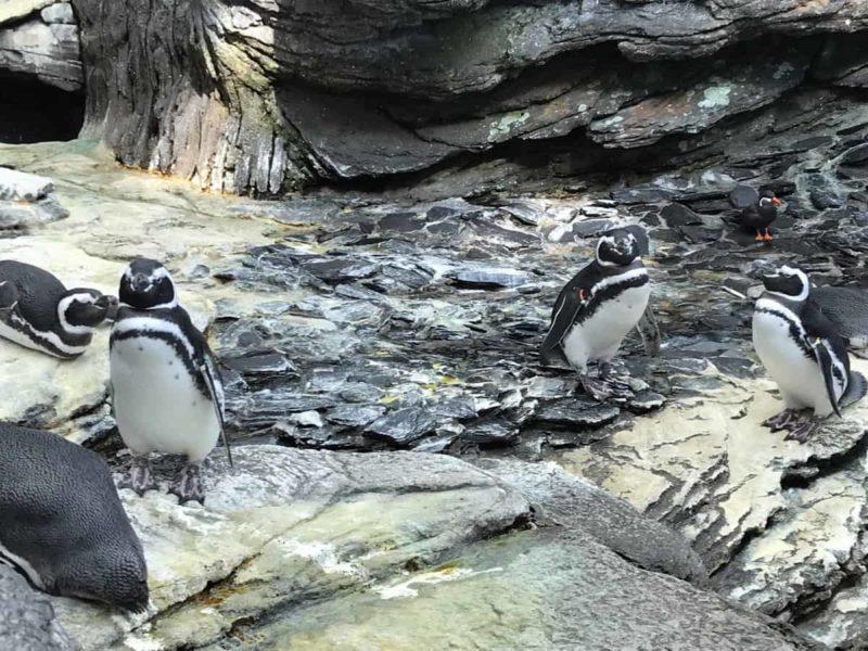 пингвин океанариум