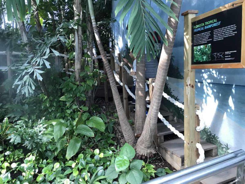 тропический лес океанариум лиссабон