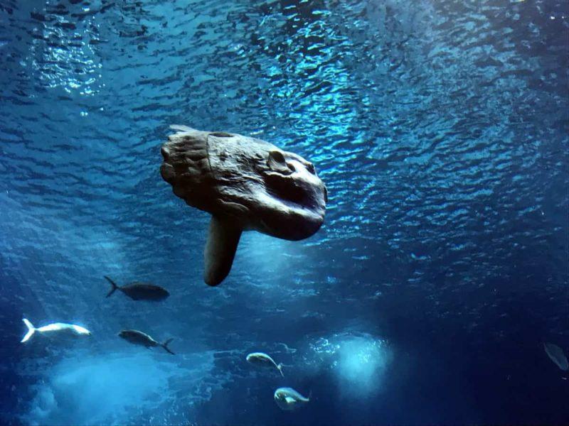 рыба луна