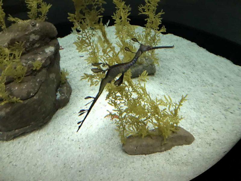 морской конек океанариум
