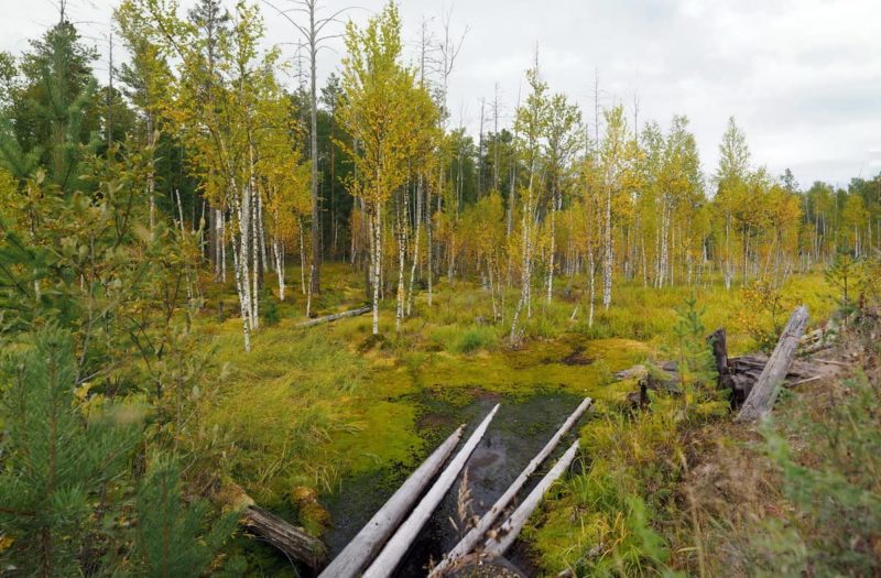 болото, Томская область