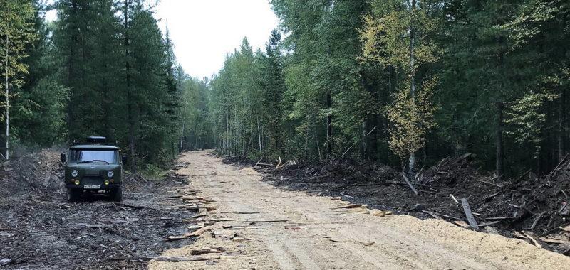 лесная дорога из срезки и опилок